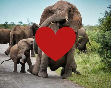 【像画像】ゾウさんのおっぱいがこちら