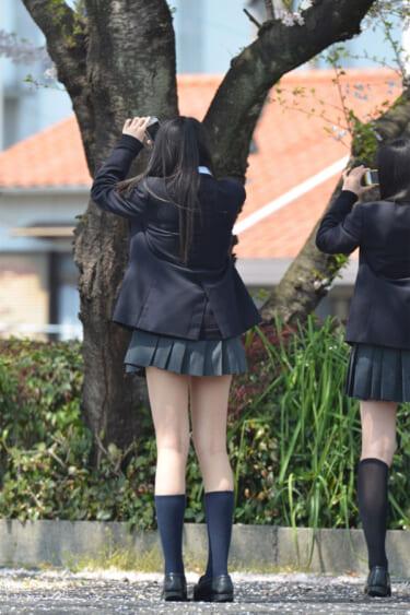 【画像】桜を撮るミニスカJKがエッチすぎる