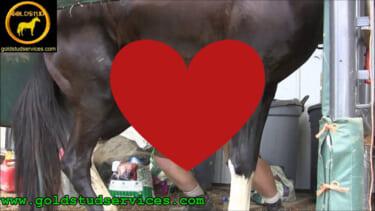 【動画】お馬さん🐴、オナホが気持ちよさすぎて腰が砕ける